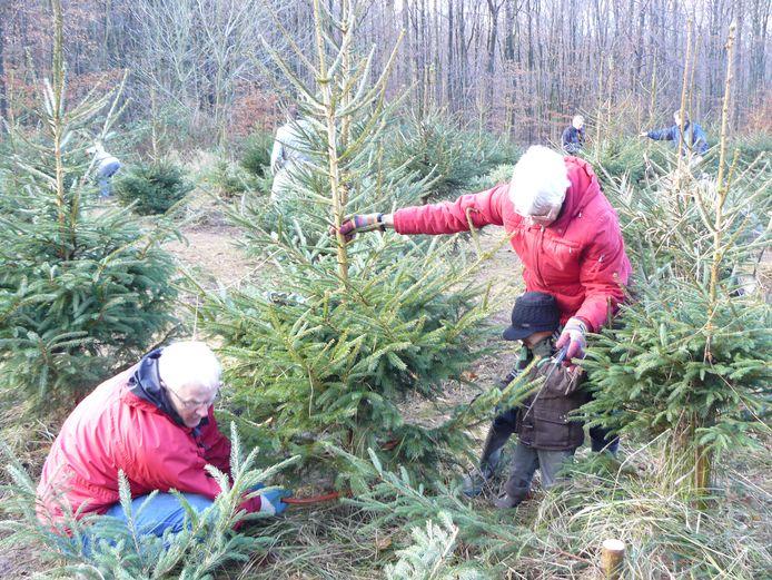 Zelf de kerstboom kiezen en zagen in het Kuinderbos. eigen archieffoto