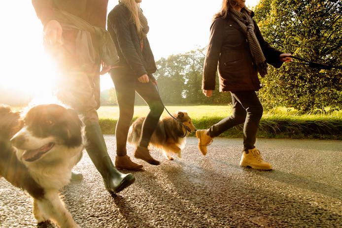 Herfst autumn stock wandelen hond sjaal