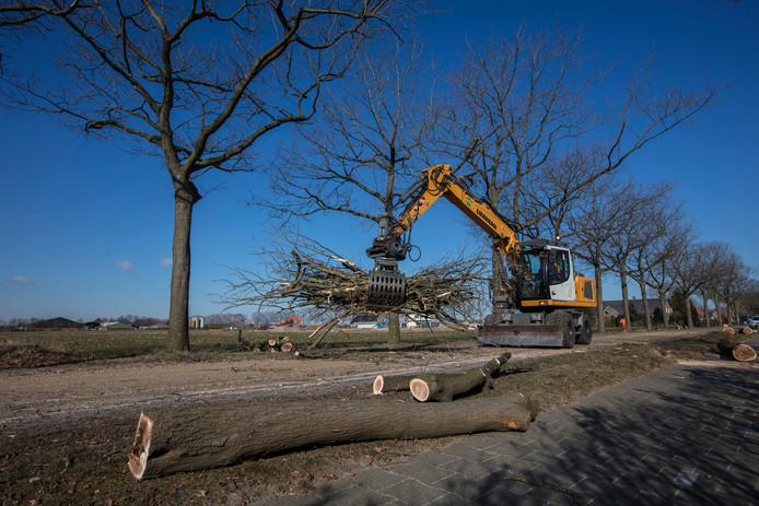 Bomen kappen langs de Kerkendijk in Someren