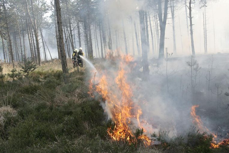 De brandweer probeert een natuurbrand te blussen op de Neterselse Heide in de Kempen (Noord-Brabant). Beeld null