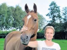 Omgeving Amersfoort doodsbang voor paardenbeul