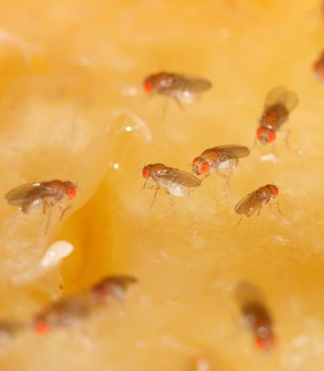 Zo houd je fruitvliegjes en andere beestjes buiten de deur