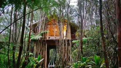 De 10 populairste boomhutten op Airbnb