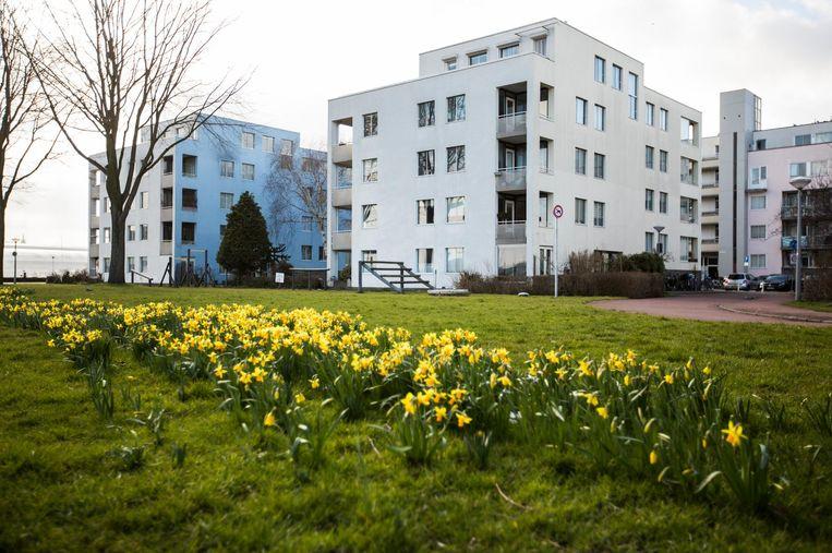 De appartementen aan het IJplein zijn gebouwd als urban villa's in het groen, neergestrooid als op een campus. Beeld Eva Plevier