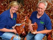 Verwarrende weken voor Lochemse kippenboer