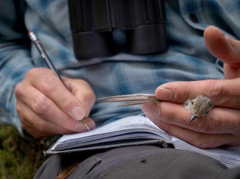 Christiaan Both gaat langs nestkastjes op het Dwingelerveld. Op de foto noteert hij de gegevens van een vliegenvanger die hij in de hand houdt. Beeld Herman Engbers
