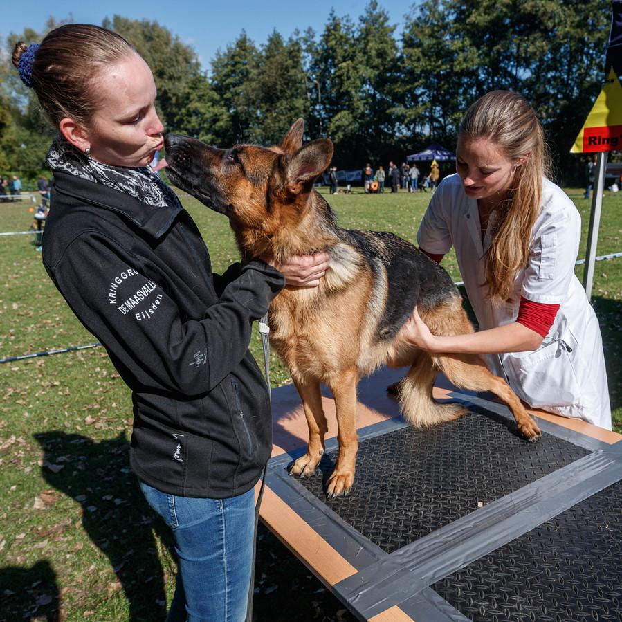 Club van liefhebbers van Duitse herders hebben open dag op eigen terrein. Zelfs helemaal vanuit Maastricht komen herderbezitters erop af, zoals hier Petra Dijkstra met herder Dali. Hier laat ze de hond bekijken door een dierenarts.