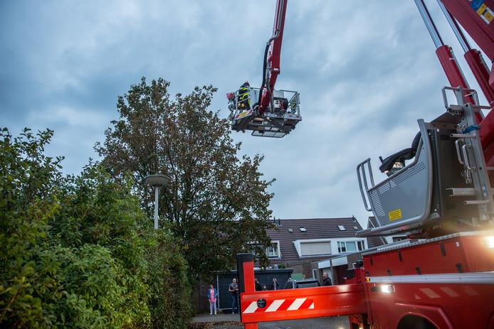 Kat in boom in Roosendaal