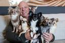 Peter Gillis met zijn 7 chihuahua's in Lommel.