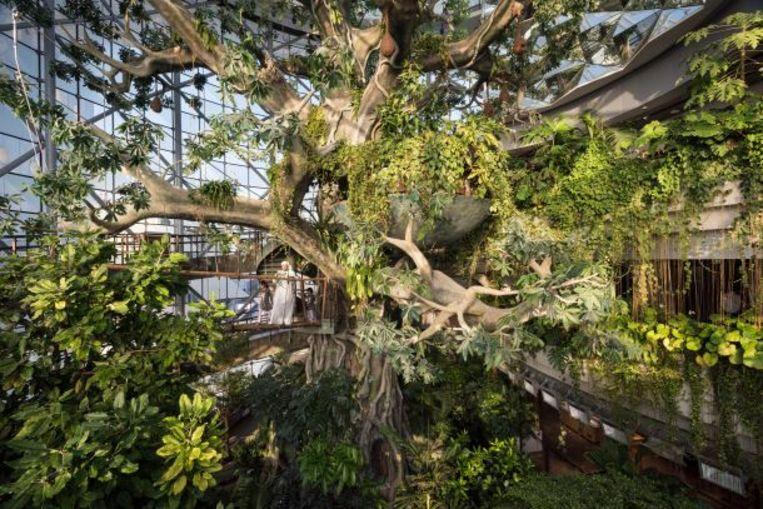 Beeld uit de reeks 'Garden of Delight' van Nick Hannes: Green Planet, een indoor tropisch regenwoud.