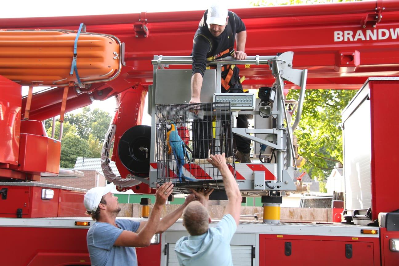 De brandweer levert papegaai Camaro af na de reddingsactie.