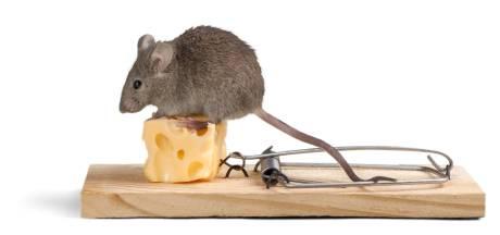Wat is erger, een muis of een mens?