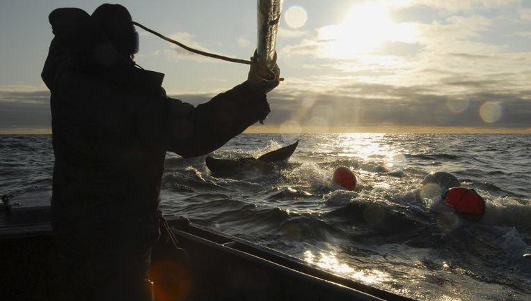 Met harpoenen wordt in de Barentszee gejaagd op walvissen. Beeld Andrey Shapran/Redux