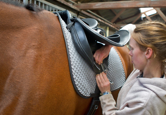Een meisje bevestigt het zadel op een paard. Het meisje én het paard komen niet voor in dit verhaal.
