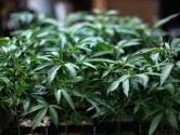La Commission des stupéfiants de l'Onu retire le cannabis des drogues les plus dangereuses
