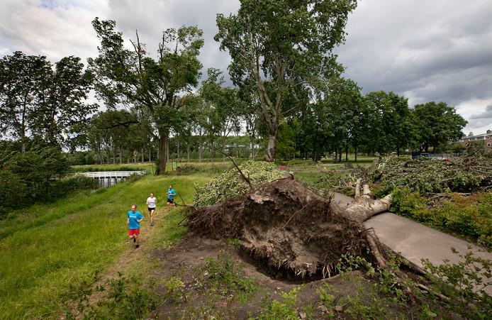 Trimmers ontwijken een nog niet opgeruimde boom in de Genneper Parken in Eindhoven.