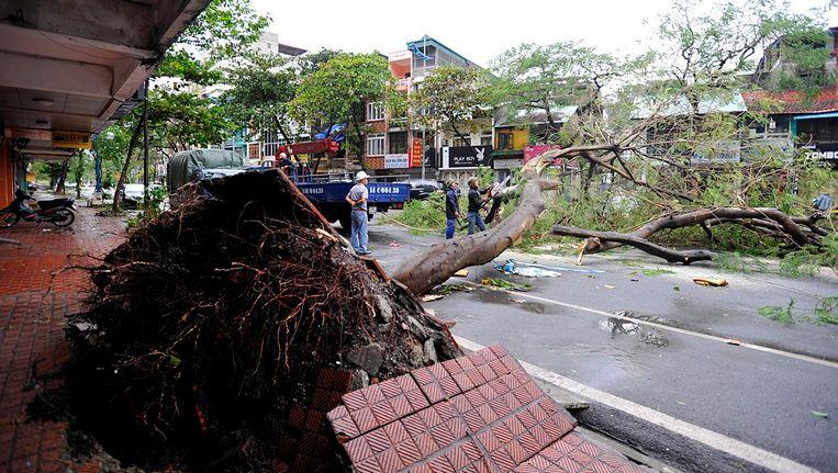 Een omgewaaide boom in de Vietnamese plaats Ha Long. Beeld EPA