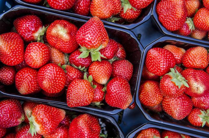Hollandse aardbeien. De 'zomer- koninkjes' kweken de telers nu zelfs in de winter.