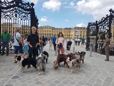Jonge dogfrisbeeërs uit Den Ham trekken bekijks in Wenen