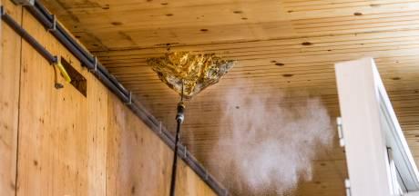 Alarmfase 1 bij wespenjager: 'Het zijn net dartpijlen, ze gaan recht op hun doel af'