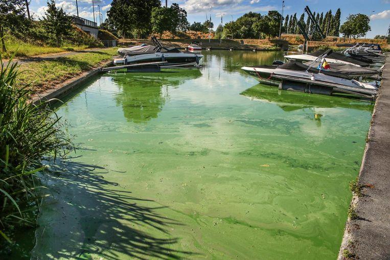 Blauwalgen kleuren het water in de jachthaven van Izegem groen-blauw (archief 2018)