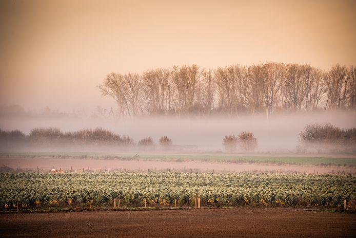 De mistige koude ochtend leverde deze prachtige beelden op.