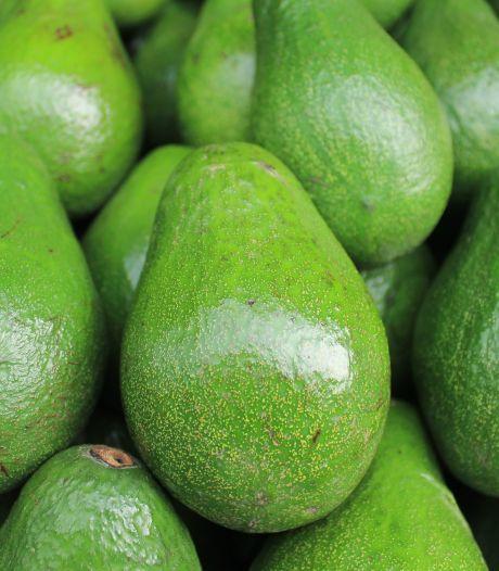 75 kilo cocaïne verstopt in container vol avocado's