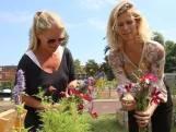 Genieten van mooie bloemen en ze ook nog gratis plukken? Dat kan bij de Balijebrug