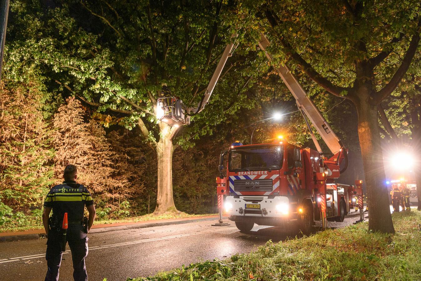 Vallende tak doorboort autoruit in Oosterhout.