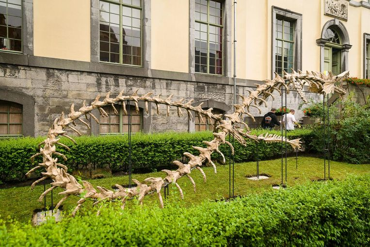 Op de binnenkoer van de Wereld van Kina staat een nieuw drakenskelet.