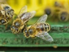Bijen tellen in de tuin