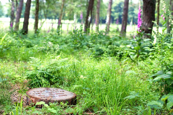 Zo eenvoudig is het op natuurbegraafplaats Heidepol. Een eenvoudige vergankelijke boomschijf markeert een natuurgraf