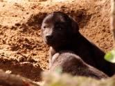 VIDEO: Twee gevlekte hyena's geboren in de Beekse Bergen