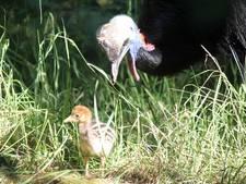 Bijzondere geboorte in DierenPark Amersfoort