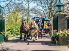 De paardentram rijdt weer door het centrum van Delft
