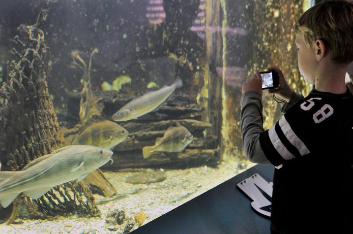 Het aquarium bij museum Terra Maris