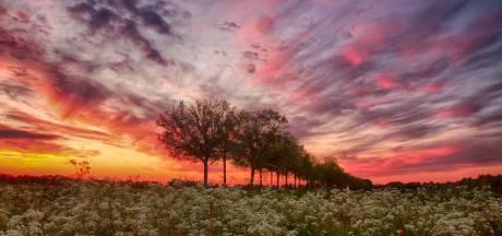Tom uit Vriezenveen maakt de mooiste natuurfoto