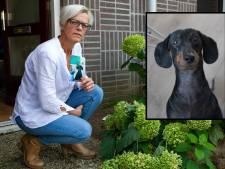 Dwergteckel Takkie doodgebeten door bullmastiff in bos bij Zutphen: 'Ik hoor haar nog kermen'