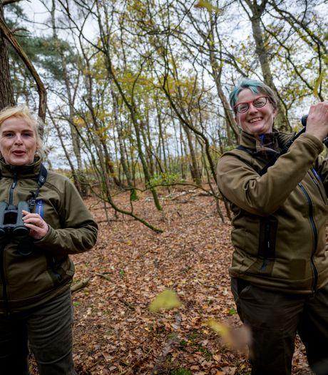 Met deze tips van de boswachter vind je zeker eekhoornnesten in het Buurserzand
