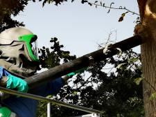 CDA Halderberge: gemeente reageer sneller op meldingen eikenprocessierups