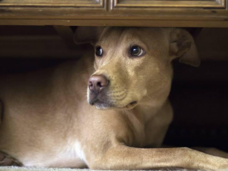 Stadse Fratsen: Pilletje voor de hond