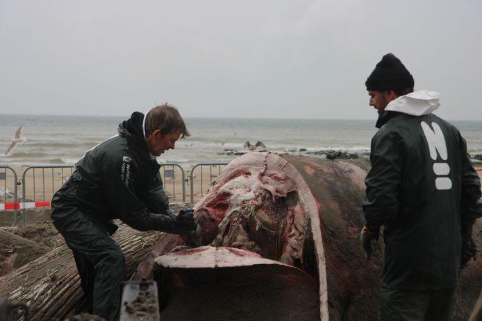 Met fileermessen wordt in de walvis gesneden. Daar komt een zeer sterke lucht bij vrij.