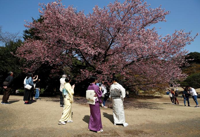 Bezoekers kijken naar de bloesems in bloei afgelopen voorjaar in de nationale tuin Shinjuku Gyoen in Tokyo.