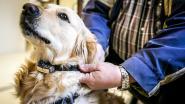 """Mensen geven stem aan honden in campagne tegen schokhalsbanden: """"Misschien is het beter als ik niet meer beweeg"""""""
