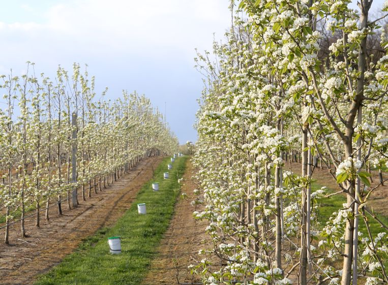 GLABBEEK-Door deze boomgaard loopt de afgeschafte trage voetweg 43