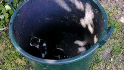 Wraakroepend: vier piepjonge kittens in vuilnisbak gedumpt