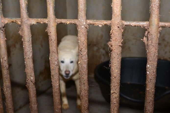 Een ziek en gestresste hond in een van de hokken bij de fokker in Deventer.