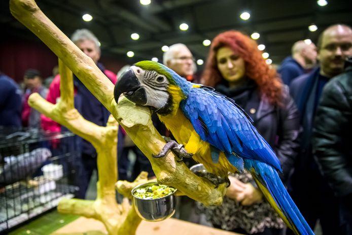 Een klassieke papegaai op een van de eerdere edities van de Zwolse Vogelmarkt.