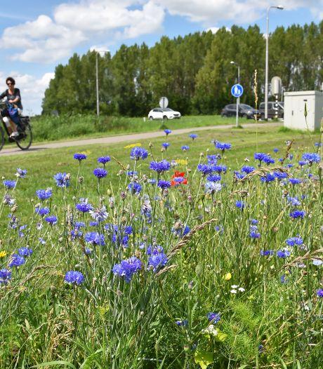 Bloempjes voor de bijtjes in Hulst