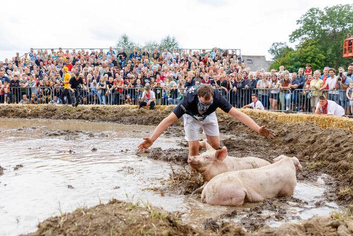 Deelnemers proberen een varken te tikken tijdens het onderdeel zwientie tikken op het Dicky Woodstock Popfestival.